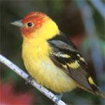 Adult bird