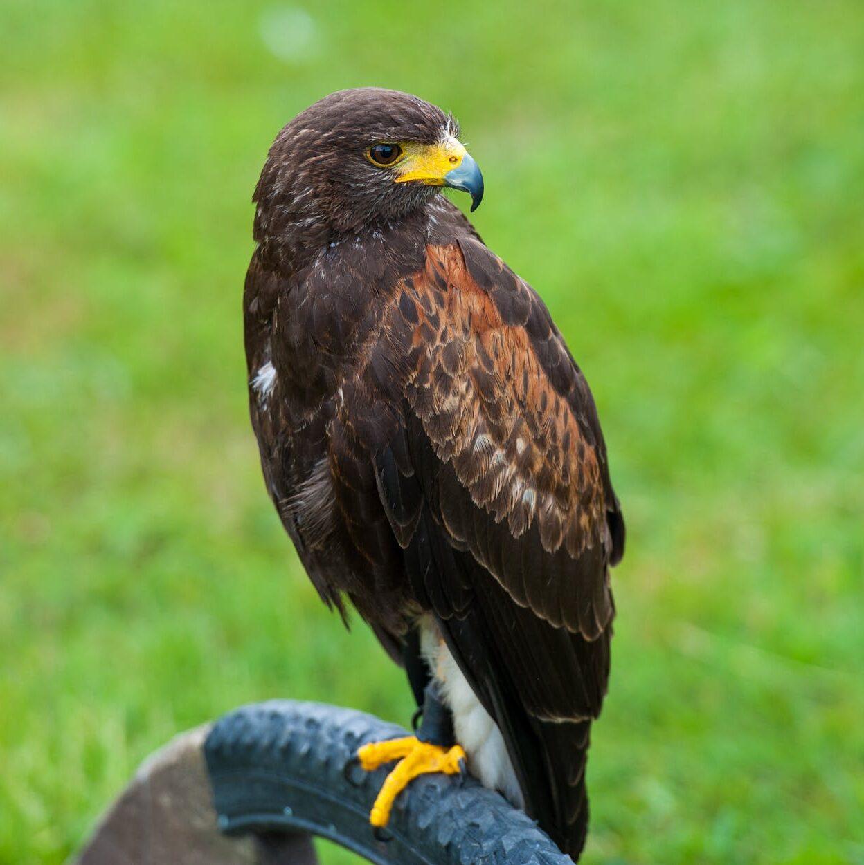 bird animal grass beak